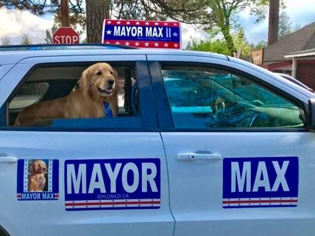 ¡Un perrito es alcalde en California! ¿Pero cómooo?