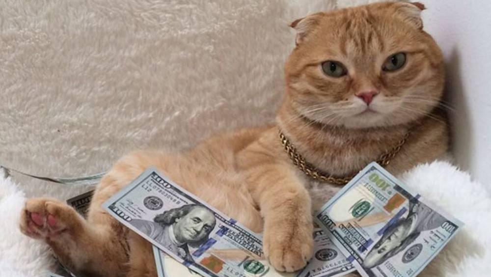Un gato impide que su dueña gaste de más ¡Necesitamos a este gatito!